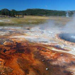 Bacterial growths may offer clues about Earth's distant past