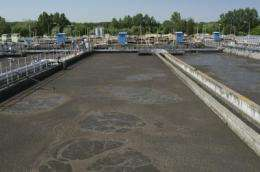 Biodiesel from sewage sludge within pennies a gallon of being competitive