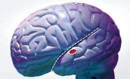 Blind people use both visual and auditory cortices to hear