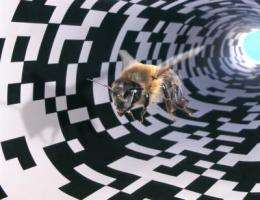Brain gene expression changes when honey bees go the distance