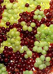 Bringing better grapes a step closer to reality