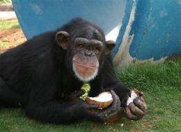 Chimps' future prompts debate over NM primate lab (AP)
