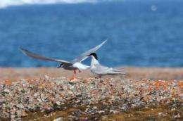 Coastal birds carry toxic ocean metals inland