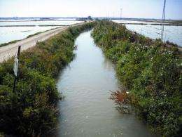 Cocaine and ecstasy detected in waters of the L'Albufera in Valencia