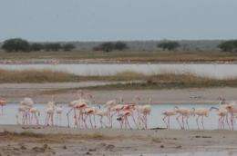 Cross-border conservation vital to protect birds in a climate-change world