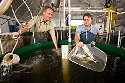 Recirculating systems for warm-water marine fish developed by USDA scientists