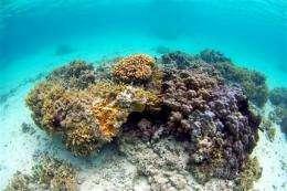 Demise of coral, salamander show impact of Web (AP)