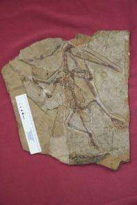 Dino-era sex riddle solved by new fossil find