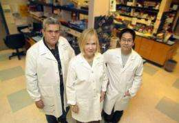 Discovery points toward anti-inflammation treatment for blinding disease