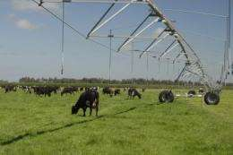 Does pasture irrigation increase groundwater contamination?