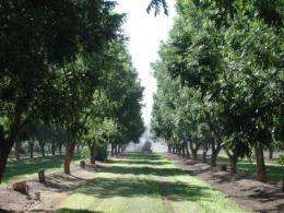 Effectiveness of state-level pecan promotion program evaluated