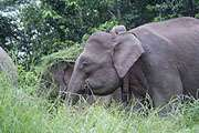Elephant data informs habitat protection