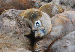 Elephant seals improve maps of Antarctic seafloor