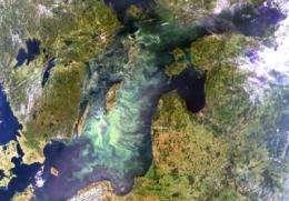 Eutrophication makes toxic cyanobacteria more toxic