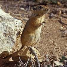 Fat Sand Rats Are SAD Like Us