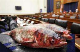 Feds pass on surest solution to Asian carp advance (AP)