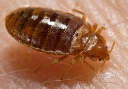 First preliminary profile of proteins in bed bugs' saliva