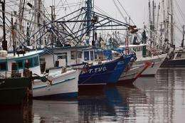 Fishing vessels sit at port after the government closed parts of the Gulf of Mexico to fishing in May