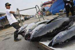 Fish stocks in the East and South China Seas are dwindling, say experts