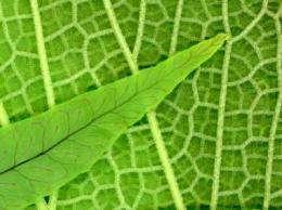 Flower power makes tropics cooler, wetter