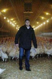 Germany halts pork, egg sales in dioxin scare (AP)