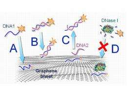 Graphene-DNA biosensor selective, simple to create