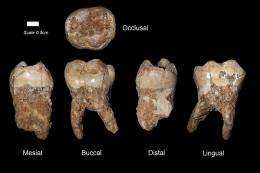 Human teeth found in the Qesem Cave