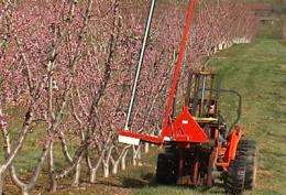 Hybrid string blossom thinner tested in peach orchards