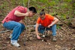 Iron legacy leaves soil high in manganese