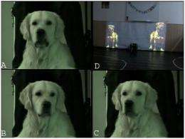 Dogs can tell canine size through growls