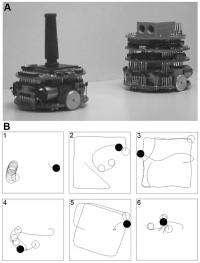 Coevolution of predator and prey robots