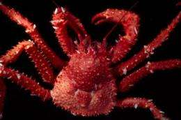 King crab distributions limited by temperature in the Southern Ocean
