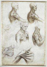Leonardo's anatomical sketches fascinate modern-day anatomist