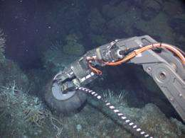 Life thrives in porous rock deep beneath the seafloor, scientists say
