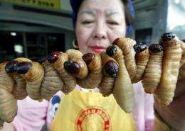 Lovely grubs ready for cooking in Bangkok