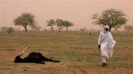 Millions face hunger in arid belt of Africa (AP)