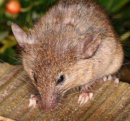Mouse Work: New Insights on a Fundamental DNA Repair Mechanism