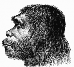 Neanderthal faces were not adapted to cold