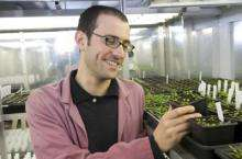 New defenses deployed against plant diseases