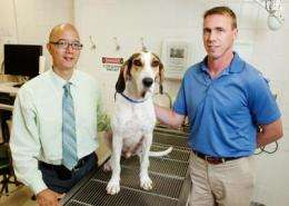 New lymphoma treatment shows promise in dogs
