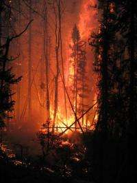 Northern wildfires threaten runaway climate change, study reveals