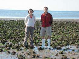 Oil spill reshapes sweeping new study of oyster reefs -- Virginia to Florida