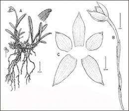 New orchid species is discovered in the UC Botanical Garden collection