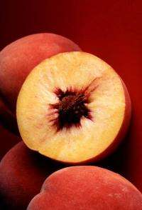 Peaches, plums induce deliciously promising death of breast cancer cells