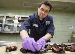 Power line blamed for bird kill in Louisiana (AP)