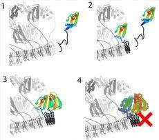 Regulating prions naturally
