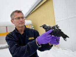 Rescue services chief Christer Olofsson said most of the birds found were dead