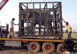 Sambo, a five-tonne bull elephant