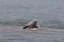 Sea creatures flee oil spill, gather near shore (AP)