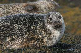 Seal deaths may have been caused by boats